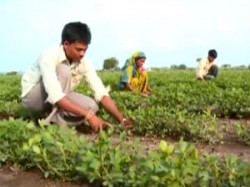 Gujarat Government Aid To Tribal And Small Farmers