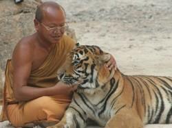 Controversial Popular Thai Tiger Temple