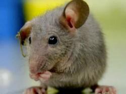 Scientists Identify Memory Boosting Molecule In Mice