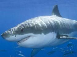 Man Fighting Way Of Shark