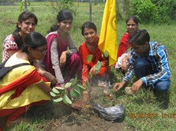 Thousand Plants Planting Taking Pledge Raising It As Child