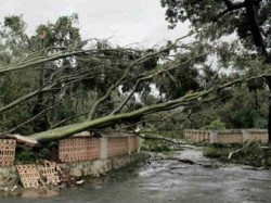 Odisha Lost 26 Lakh Trees After Cyclone Phailin