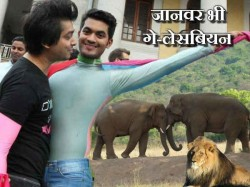 Not Only Men Animals Are Also Gay Lesbian Homosexuals