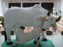 Jhabua Cow Will Decide Who Is Its Owner