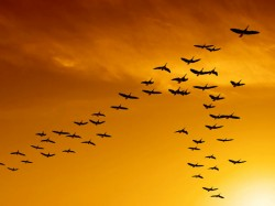 Why Birds Are Flying V Formation