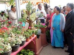 Anandiben Patel Inaugurated Flower Show 2014 At Ahmedabad River Front