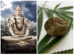 Shivratri Special Why Lord Shiva Drinks Bhang
