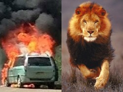 Car Bursts Into Flames The Middle The Lion Enclosure