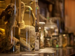 All About Icelandic Phallological Museum