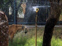 Scorching Heat Continues In Whole North India