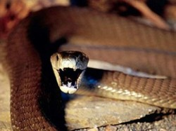 Most Dangerous Snake Species The World