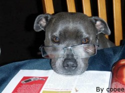 Have Look On These Animals Who Are Quite Intelligent