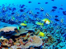 Gujarat India S First Coral Garden To Be Set Up In Dwarka