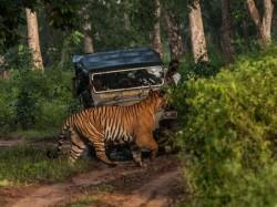 Most Popular Wildlife Sanctuaries In Karnataka