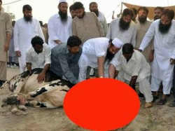 Lashkar Chief Hafiz Saeed Slaughters Cow On The Occasion Eid