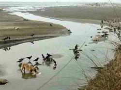 Bodies Flow Down River Ganga 3 Months Narendra Modi S Clean Ganga Plan In Stress