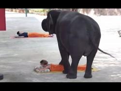 Thailand Tourists Get Massaged 3 Ton Elephants