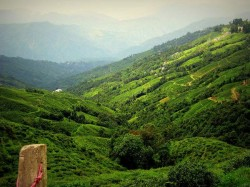 Darjeeling Is A Town In The Indian State Of West Bengal