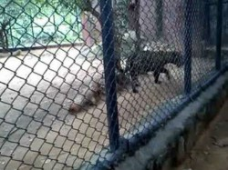 Mother Drops 2 Year Old Son Into Cheetah Pit At Us Zoo