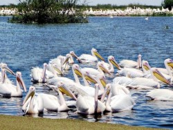 Top 5 Bird Sanctuaries India