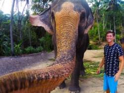 B C Man S Elephant Selfie Thailand Goes Viral