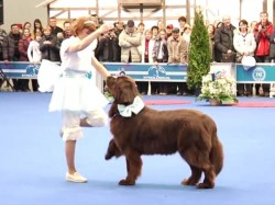 Video Watch This Dancing Dog Is Much Better Than The Professional Dancers
