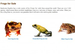 Buy Crocodile Lizards Snakes And Other Insects Online With Guarantee Of Doa