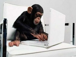 Funny Geeky Animals Using Computers 026137 Pg