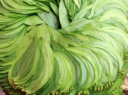 Betel Leaf Recipes Various Diseases
