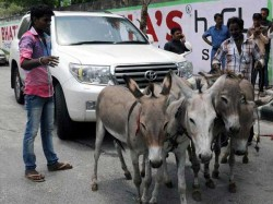 Toyota Land Cruiser Pulled By Donkeys In Surat 026309 Pg