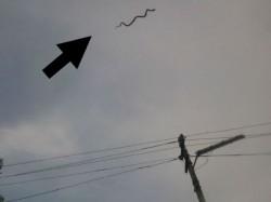 Flying Snake Pics Goes Viral