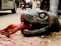 Video Bengaluru Residents Find Scary Anaconda On The Street