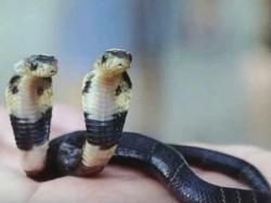 Snake Tree Earthquake Murder Marriage In Dream Interpretation In Gujarati