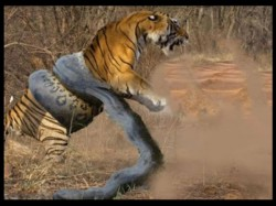 Watch Video Epic Battle Of Tiger Vs Anaconda Goes Viral