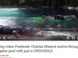 Video Prankster Charles Wieand Swims Through An Alligator Pool