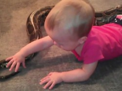 Small Girl Giving Bath Giant Python Watch Video