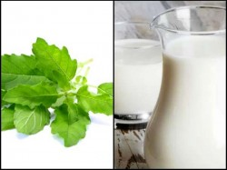 What Happens Your Body When You Drink Tulsi With Milk 029375 Pg