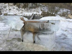 Germanys Frozen Fox Extracted From Upper Reaches Of Danube