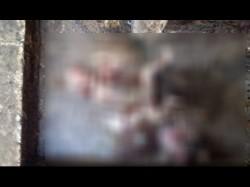Gujarat Two Fetuses Newborn Girl Were Found