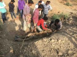 Found Dead Half Buried Condition The Open Ground The Amartap Village