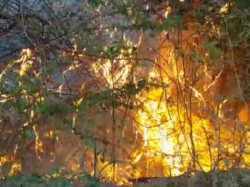 Huge Forest Fire At Danta Shamlaji