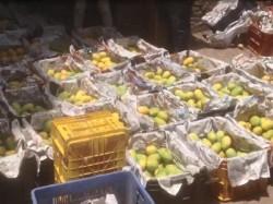 Rajkot Health Department Raid At Mango Vendor