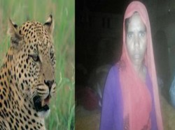 Leopard Attack Mother Shows Her Bravery Save Her Son