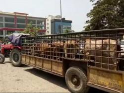 Surat Udhna Area Animal Kepting Team Attack People