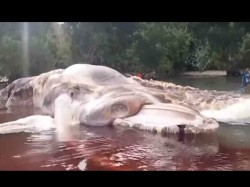 Giant Mystery Sea Creature Washes Up On Beach Indonesia