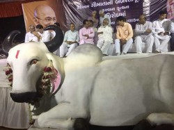 Ahmedabad Bjp Protest Over Cow Slaughter Kerala