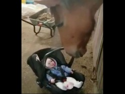 Horse Turns Babysitter Soothing Crying Baby Girl Making Her Laugh
