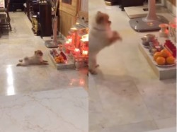 Video A Dog Doing Puja Is Going Viral On The Internet