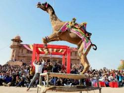 Photos How Various State India Celebrate Uttarayan Makar Sankranti