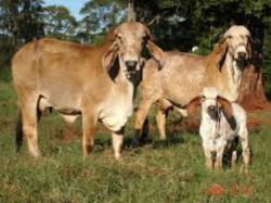 Seminar On Breeding World Famous Gir Cow Jafarabadi Buffalo